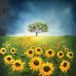 Follow the Yellow Path by Kate Richardson